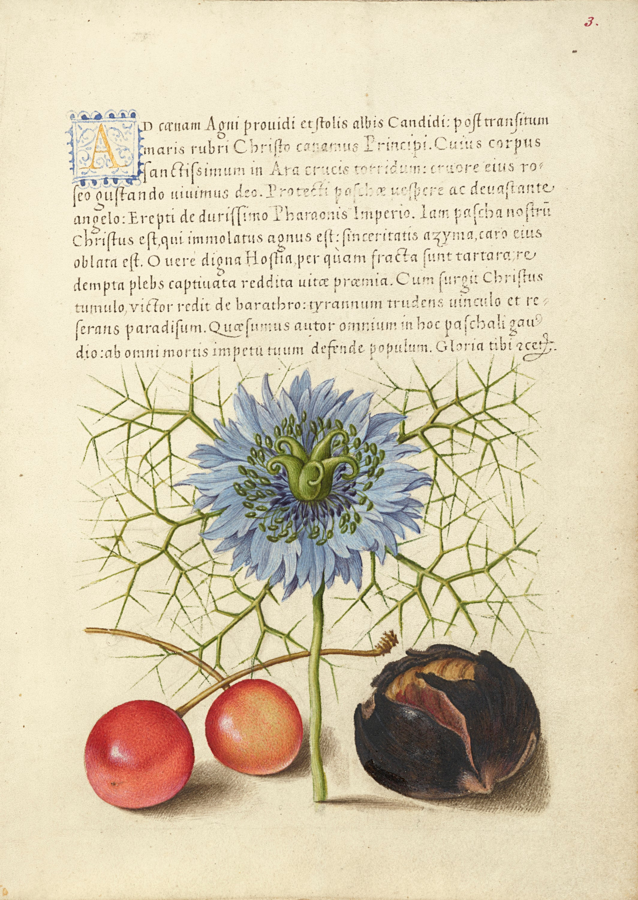 A page from a manuscript showing calligraphy and botanical illustration