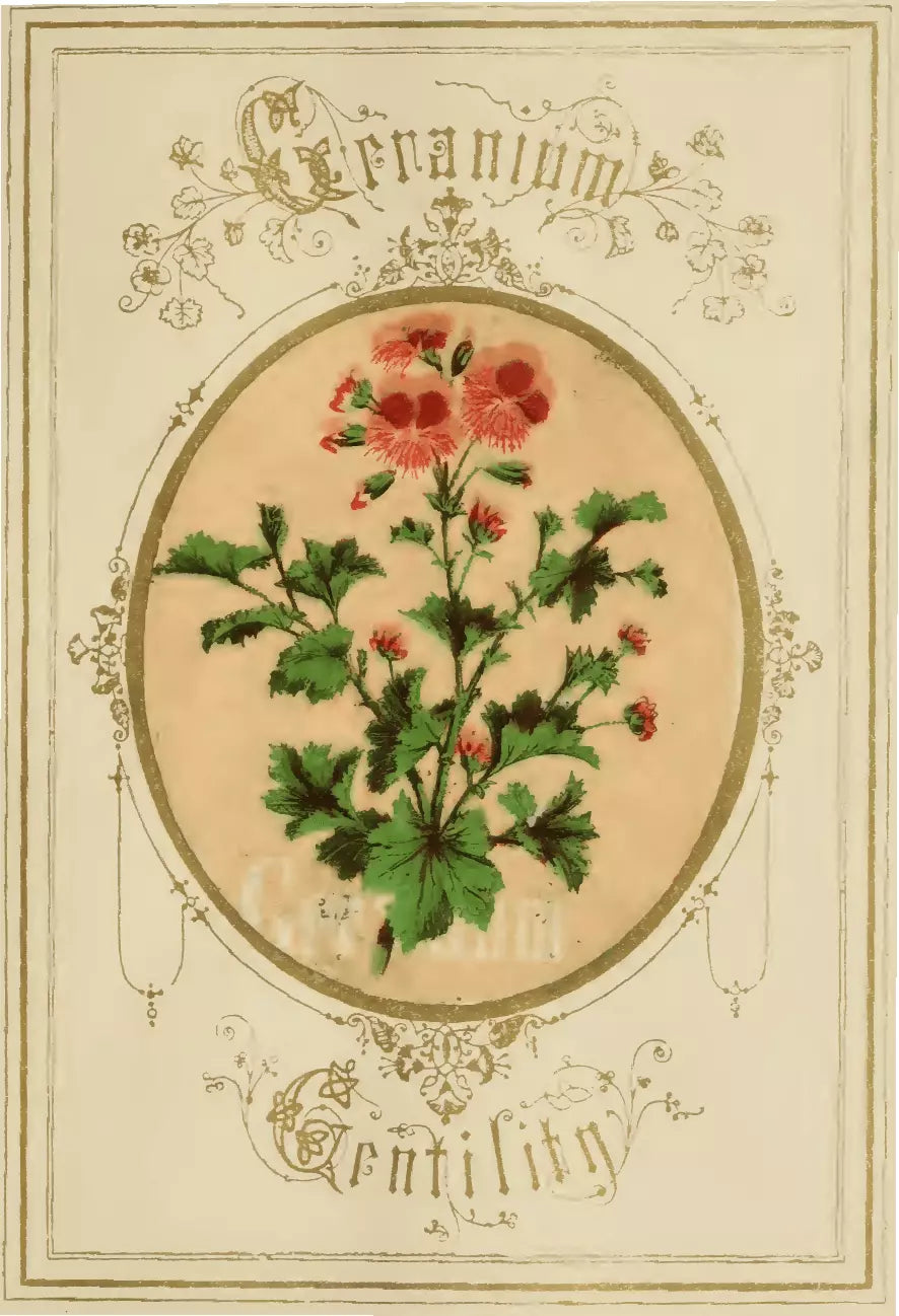 Illustration from The Language of Flowers: An Alphabet of Floral Emblems, published in 1857