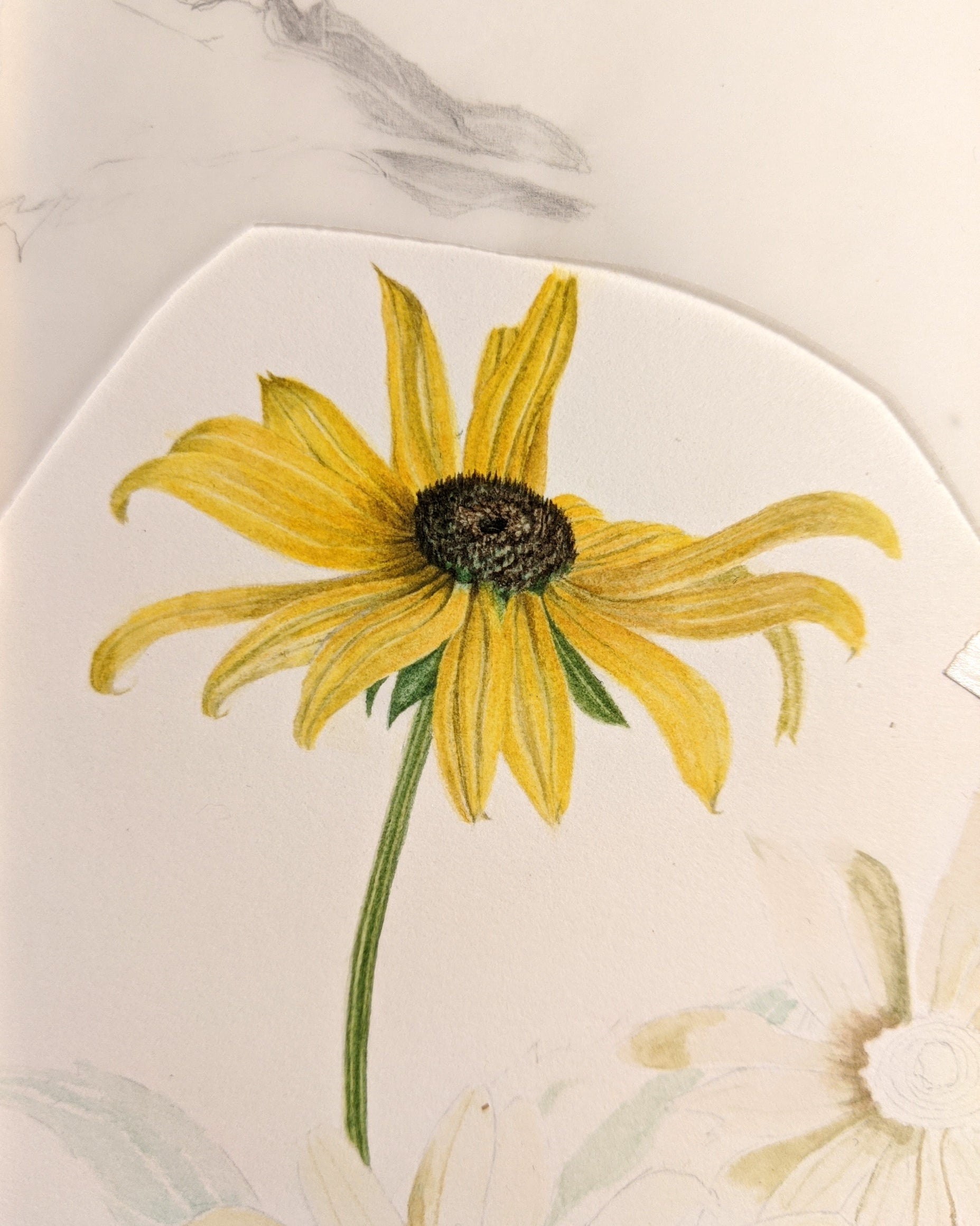 A preliminary sketch of the Black-Eyed Susan