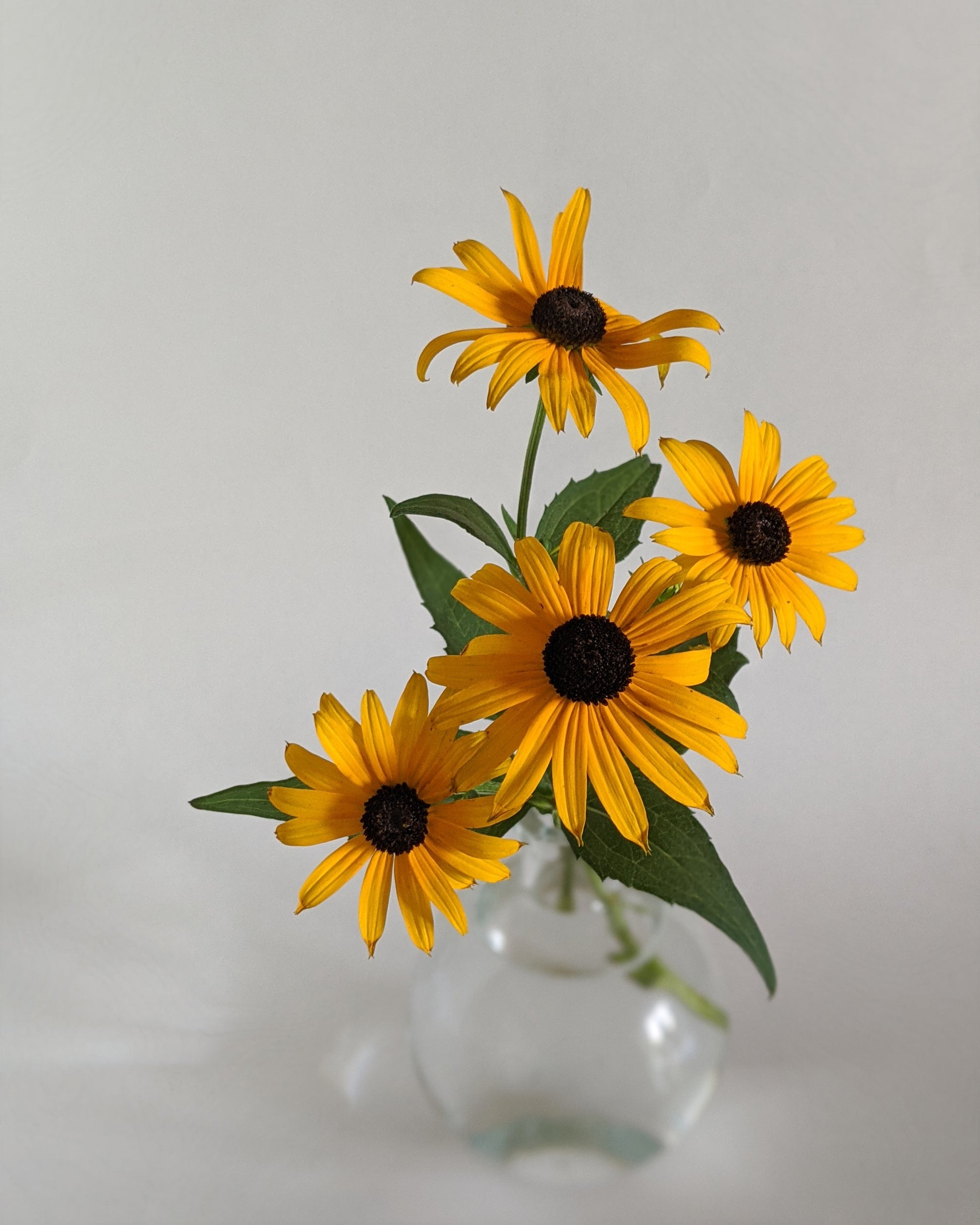 The Black-Eyed Susan within a small bud vase