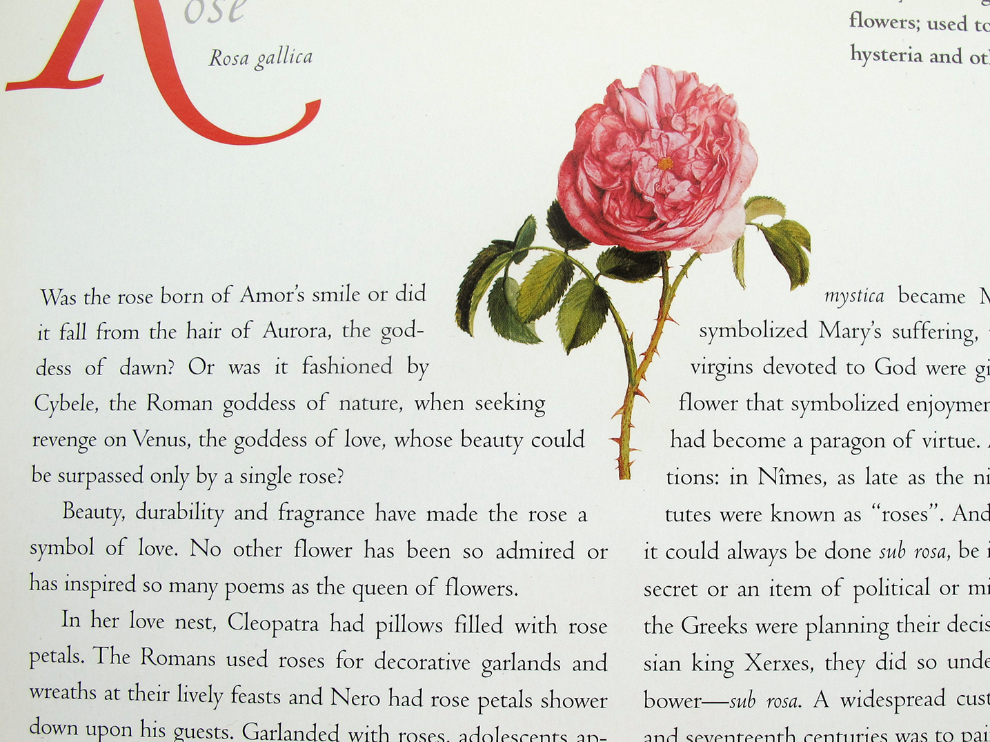 Open page of an illustrated book