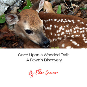 Once Upon a Wooded Trail: A Fawn's Discovery