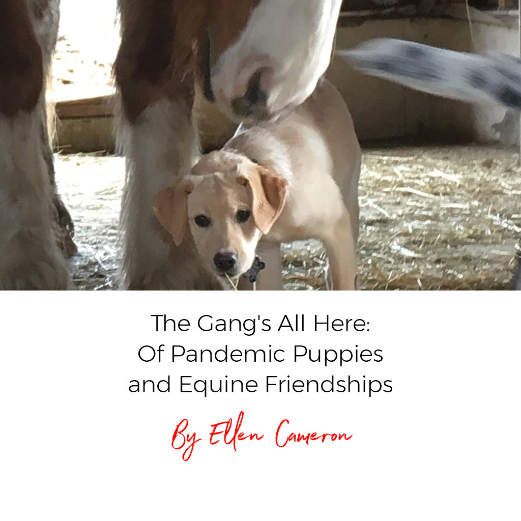 The Gang's All Here: Of Pandemic Puppies and Equine Friendships