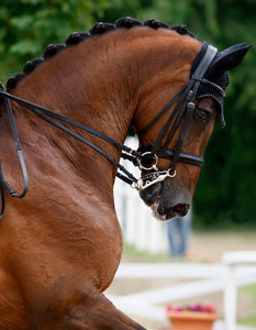 A Conversation with Brenda Minor: Dressage Judge's Perspective
