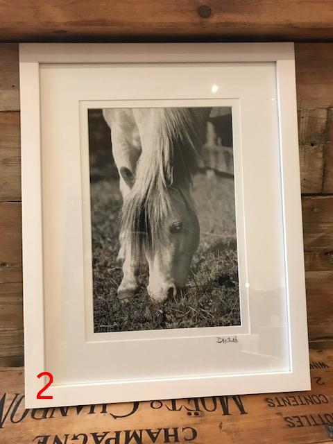 The Willow Series: Equine Photographs