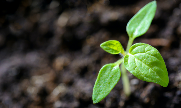 plant sprouting from the soil