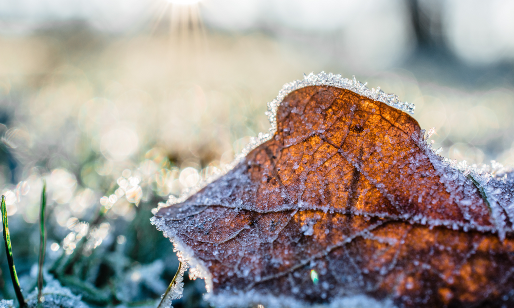 A close-up shot of a leaf on a field covered in frost.