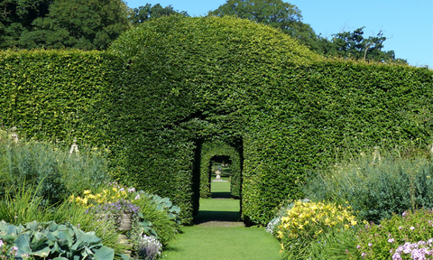 A path with herbaceous borders leading to a doorway made of shrubs at Levens Hall