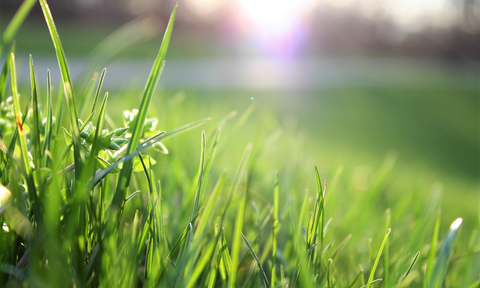close-up on the grass from the lawn