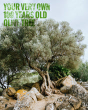 Load image into Gallery viewer, Your own olive Tree
