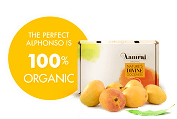 AAMRAI Organic Alphonso Mangoes Golden, Box of 12, 2.5kg-3.0kg/Box