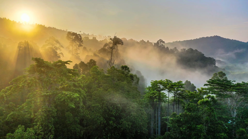 How can I protect the rain forest