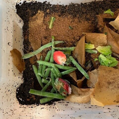 a bin of composting items - green beans, coffee grounds and bits of strawberry