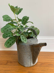 a perky houseplant in a tin watering can