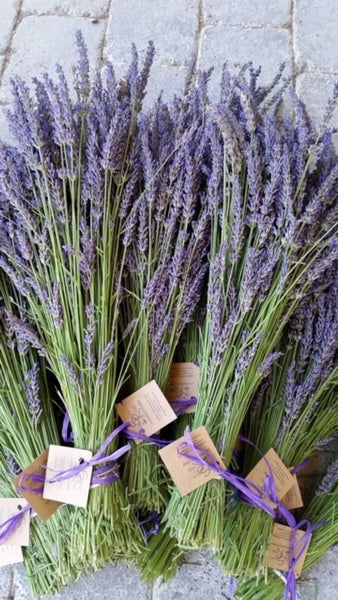 Lavandula Intermedia Grosso aka Lavandin Grosso Local Pick Up Only