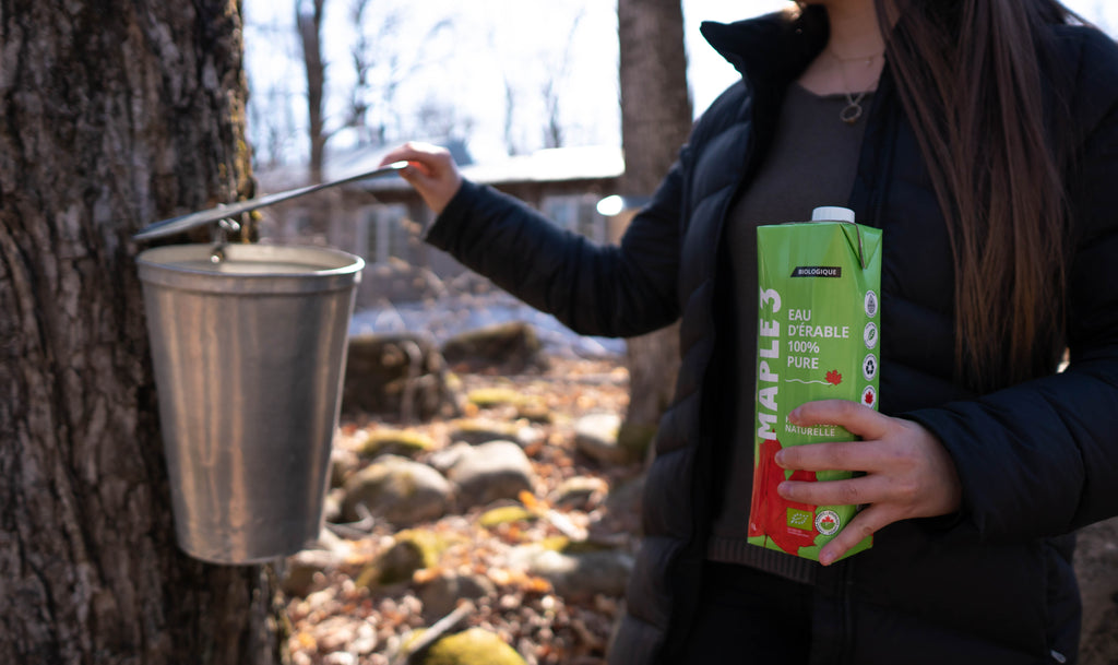 Maple Water Production and Global Warming