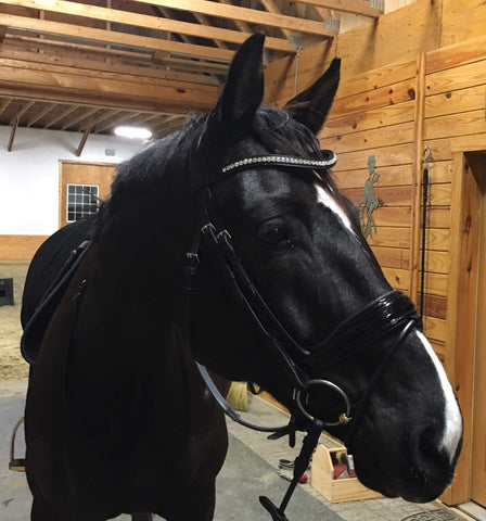 horse in barn after using Bute-Less Performance Pain Supplement