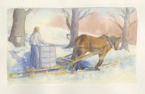 Horse collecting maple sap sugaring