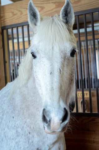 A Bute-Less® Success Story From A Therapeutic Riding Program