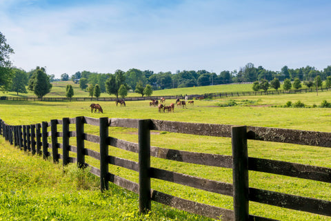 Horse pasture for UltraShield Fly Control article