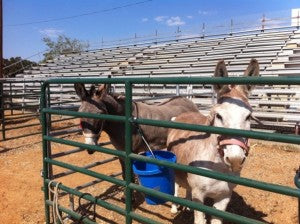 Texas Wildfires Rescuing Horses Absorbine Blog Donkeys