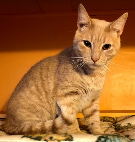 Absorbine Visits Kitty Corner Cat Rescue