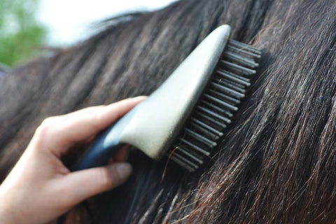 Brushing a horse's mane with a brush and ShowSheen Hair Polish & Detangler