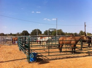 Texas Wildfires Rescuing Horses Absorbine Blog