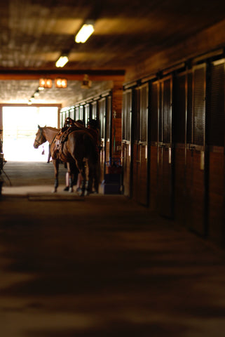9 Fly Control Strategies for Your Barn from UltraShield