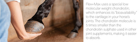 Flex Max Equine Joint Supplement Description, person holding a horse's hoof off the ground