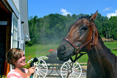 Beat the Heat - Ways To Cool Your Horse Absorbine