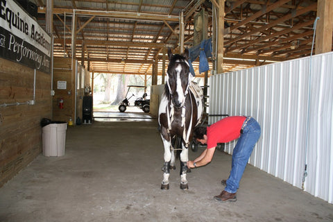 Extreme Equine Experience Absorbine
