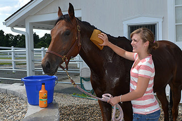 Ellie agrees, nothing beats the cooling sensation of an Absorbine® Veterinary Liniment bath on a hot day!