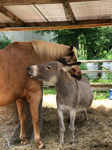 Absorbine Volunteer Days - Black Feather Rescue Horse and Donkey