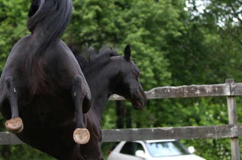 Horse kicking after using Bute-Less Performance Supplement