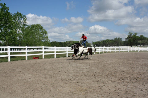 Extreme Equine Experience Absorbine Roman Riding
