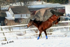 Shows a horse kicking in the snow. Article is on winter grooming tips.