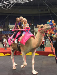 Show Camels use ShowSheen