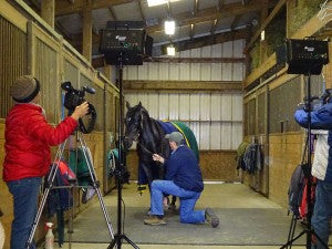 Horse being filmed in a barn aisle.