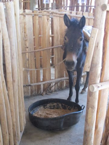 """""""Free the Donkeys"""" with Brooke and Absorbine Shade Shelter"""