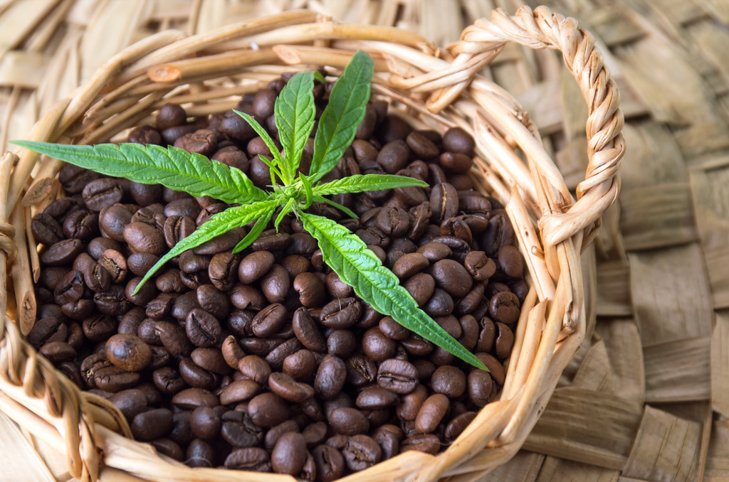 The World Capitalizes on Cannabis Coffee While People of Color Continue to be Incarcerated