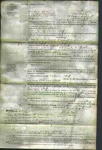 Court of Common Pleas - Rebecca Moss-Original Ancestry
