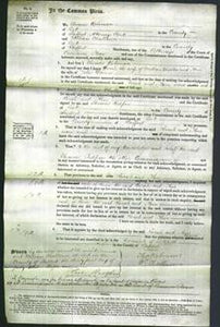 Court of Common Pleas - Sarah Buxton and Ann Downes-Original Ancestry