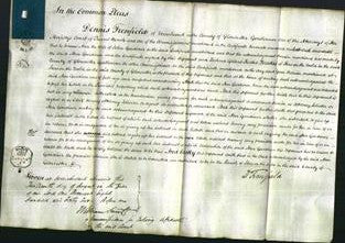 Court of Common Pleas - Ann Gardiner-Original Ancestry