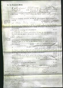 Court of Common Pleas - Mary Anne Frances Wynne-Original Ancestry