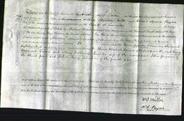 Court of Common Pleas - Mary Catharine Anne Greaves-Original Ancestry