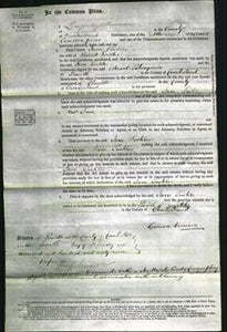 Court of Common Pleas - Jane Tinkler-Original Ancestry