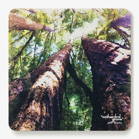 Cathedral Grove Coaster