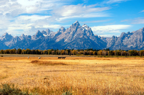 Yellowstone National Park and The Rockies
