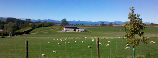 Blackenbrook Winery - the home of top-quality Nelson wine